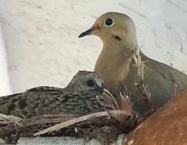 BirdsOutsideWindow